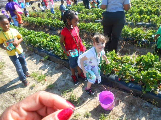 strawberry classes