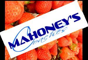 Mahoney Coaches