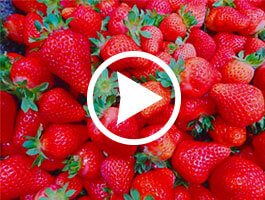 The Big Strawberry YouTube Video